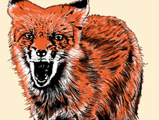 Angry Fox T-Shirt Design by