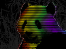 panda in Technicolor T-Shirt Design by