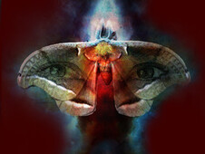 Reflection of a Moth T-Shirt Design by