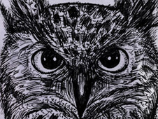 OWLSTARE T-Shirt Design by