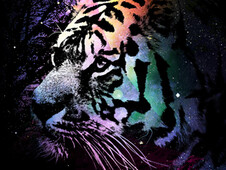 Tiger Season T-Shirt Design by