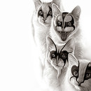 BLACK METAL CATS by ADAMLAWLESS