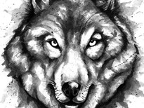 Shading of Wolf T-Shirt Design by
