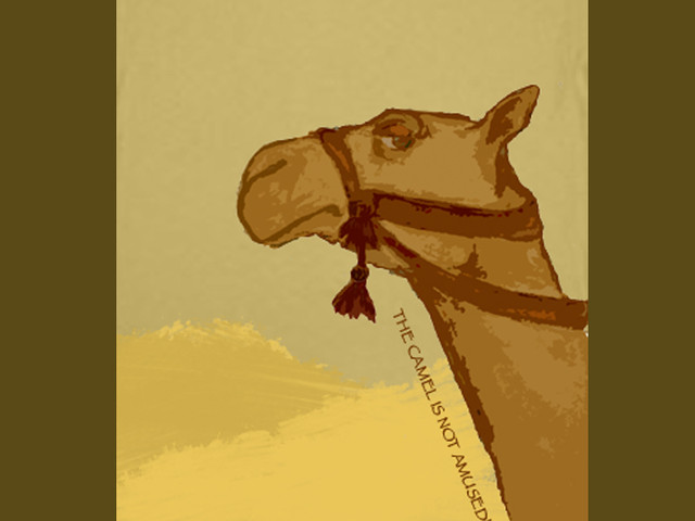 The Camel Is Not Amused