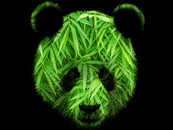 Green Panda by JoeConde