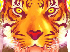 The Indian Tigress T-Shirt Design by