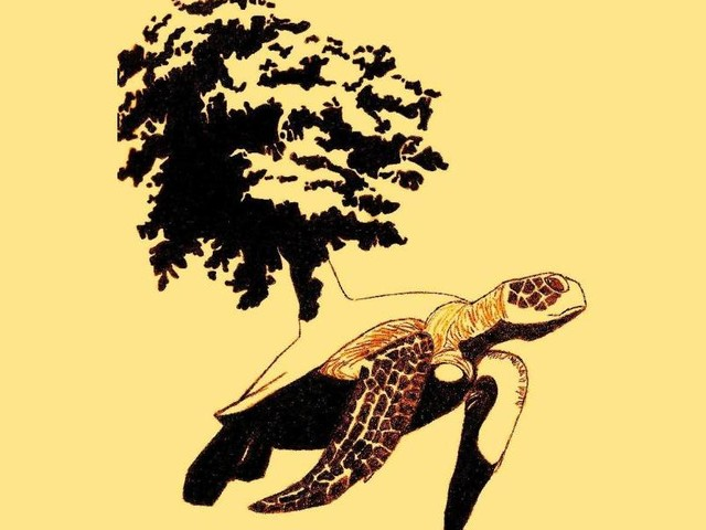 A Turtles Time