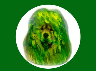 green chow chow by Bull