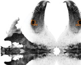 Ink Blot Vulture by sneaux79