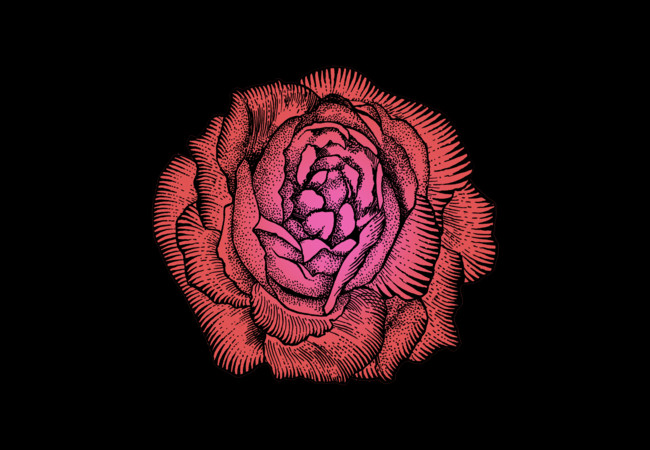 Giant Rose  Artwork