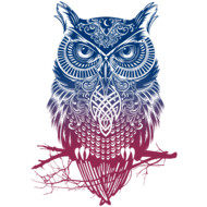 Night Warrior Owl