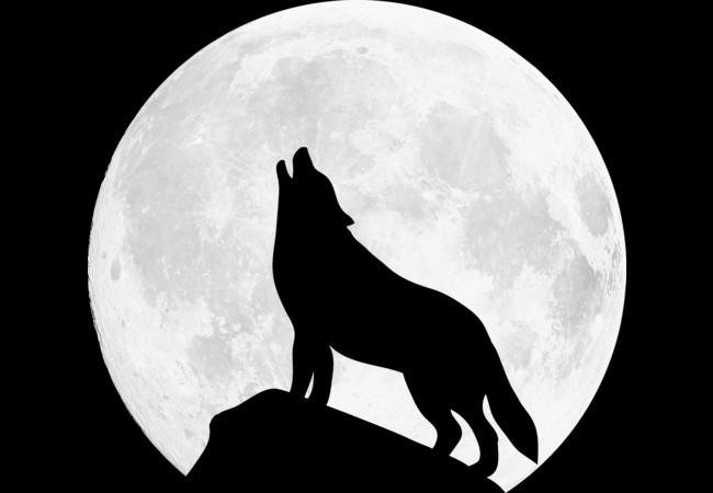 Howling Wolf - Moon  Artwork