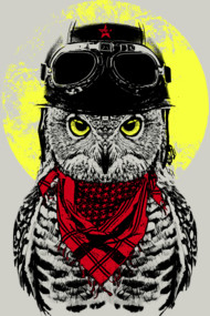 The Adventure Owl