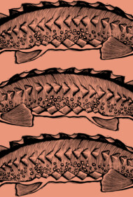 Three Sturgeon
