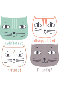 Faces of Cat