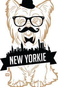 Gold New York Yorkie