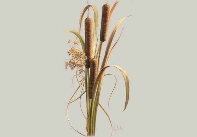 Cattails in the Breeze  Artwork