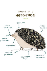 Anatomy of a Hedgehog